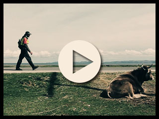 Walk2Gether. Watch the video.
