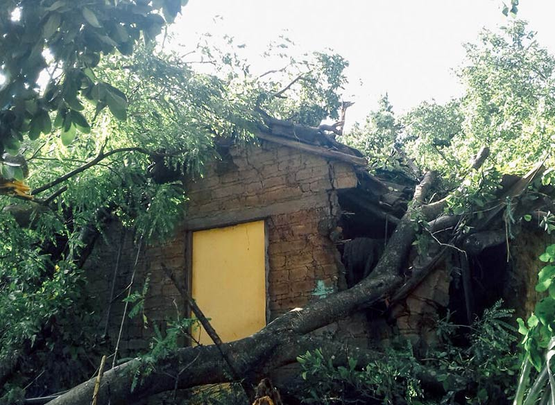 A fallen tree destroyed the home of a sponsored child when the storm that became Hurricane Michael passed through El Salvador.